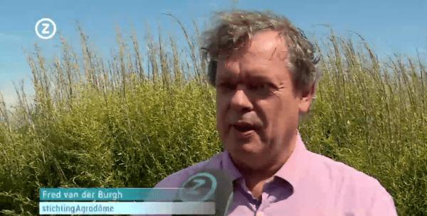Omroep Zeeland: Proefboerderij moet voor huizen van hennep zorgen