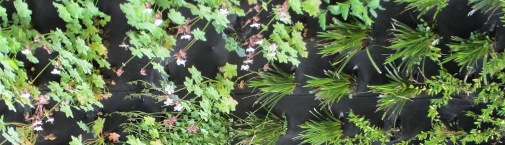 levende planten op een groene gevel