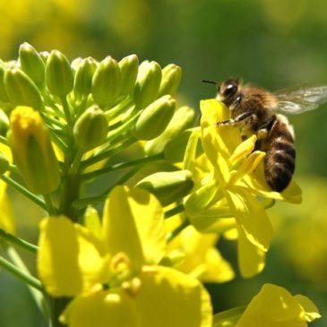 """""""Kabinet pak regie op beleid biogrondstoffen"""""""